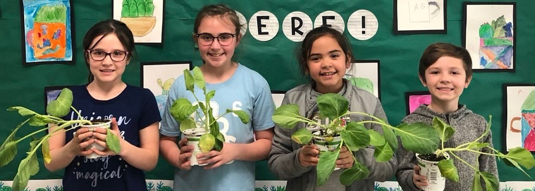 Starr Third Graders receive their own Cabbage Plants